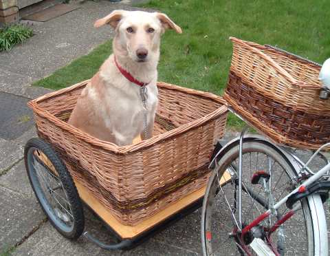 Bikes With Baskets For Dogs Harry s Dog Trailer